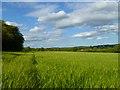 SP7903 : Farmland, Princes Risborough by Andrew Smith