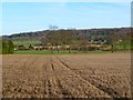 SP8705 : Farmland, Wendover by Andrew Smith
