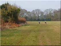 SP9504 : Pasture, Bellingdon, Chartridge by Andrew Smith