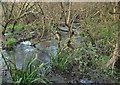 SS8577 : Stream by Burrows Well, Merthyr Mawr Warren by eswales