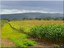 SU2991 : Farmland, Fernham by Andrew Smith