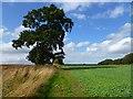 SU3091 : Farmland, Fernham by Andrew Smith