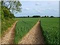 SU3950 : Farmland, St Mary Bourne by Andrew Smith