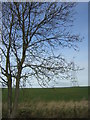 TL1456 : Wide open landscape, between Chawston and Colesden by Christopher Hilton