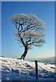 SJ9567 : Tree of Ice by Patrick Baldwin