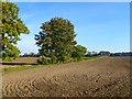 SU6994 : Farmland, Watlington by Andrew Smith