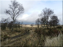 SK2773 : Moorland and silver birch trees by Peter Barr