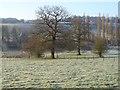 SU9899 : Pasture, Latimer by Andrew Smith