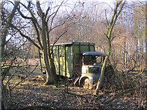 TL8063 : Lost in the woods by Bob Jones