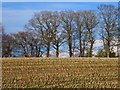 SO3602 : Treeline across stubblefield, Rhadyr, near Usk by Ruth Sharville