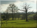 SO4104 : Winter tree scene in pasture beside the A449, as seen from a lay-by by Ruth Sharville
