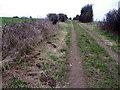 SU1123 : Molehills by the byway, Homington Down by Maigheach-gheal