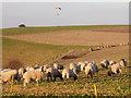 ST9420 : Sheep near Birdmore Belt by Maigheach-gheal