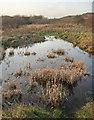 SS8577 : Small pool near Burrows Well, Merthyr Mawr Warren by eswales