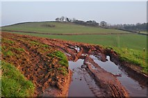 ST0215 : Mid Devon : Muddy Field Entrance by Lewis Clarke