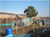 TQ7868 : Woodlands Road allotment by Oast House Archive