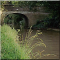 SJ6965 : Canal bank in Middlewich, Cheshire by Roger  Kidd