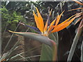 TQ0658 : Bird of Paradise by Colin Smith