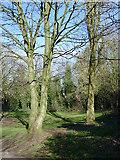 SO9097 : Open woodland near Wolverhampton by Roger  Kidd