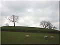 SD5288 : Sheep between Barrows Green and Natland by Karl and Ali