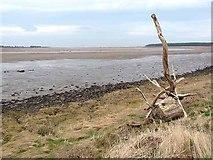NT6378 : Hedderwick Sands by Oliver Dixon