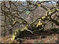 SK2476 : Woodland beneath Froggatt Edge by Neil Theasby