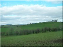 J2333 : Drumlin on the west bank of the River Bann by Eric Jones
