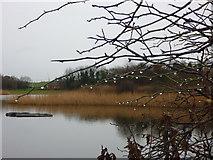 NT6578 : Coastal East Lothian : A Damp Morning at Seafield Pond, Belhaven by Richard West