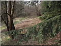 SU7532 : Track Below Adderhood Hanger by Colin Smith
