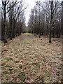 SP8032 : Ride through Coddimoorhill Wood by Philip Jeffrey