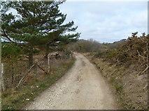 SZ0284 : Studland Heath, bridleway by Mike Faherty