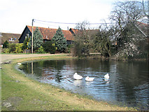 SP9013 : The Duck Pond and Old Converted Barns at Wilstone Great Farm by Chris Reynolds