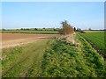 SU4638 : Farmland, Wonston by Andrew Smith