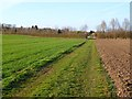 SU4639 : Farmland, Sutton Scotney, Wonston by Andrew Smith
