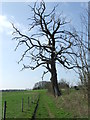 TM2047 : Dead Tree by Keith Evans