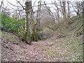 SO4481 : Norton Camp defences by Marion Phillips