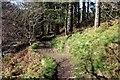 SJ1366 : Offa's Dyke Path in Llangwyfan Woods by Jeff Buck