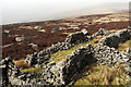 NY9628 : Sheepfold near summit of Monks Moor by Trevor Littlewood
