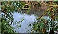 J4372 : The Enler River, Dundonald (2) by Albert Bridge