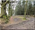 ST1008 : Old boundary by Jonathan Kington