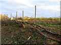 SU0625 : Hedge laying, Croucheston by Maigheach-gheal