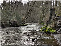 SJ8383 : River Bollin, Styal Country Park by David Dixon