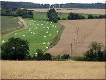 TL4538 : View from Chrishall Church by John Sutton