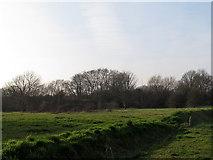 TQ1672 : Ham Lands nature reserve by Stephen Craven
