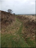 SW9462 : A ditch on the east of Castle-an-Dinas by David Smith