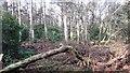 NS7496 : Ochtertyre Moss Wood by Richard Webb