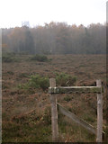 SY9583 : Heathland and Woodland, Norden Common by Peter Bond