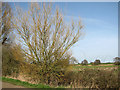 TG3518 : Willow tree beside the track to Browns Hill by Evelyn Simak