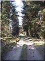 NO5998 : Track through Braeside Wood by Stanley Howe