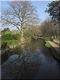 ST0207 : Mill Stream, Cullompton by Derek Harper